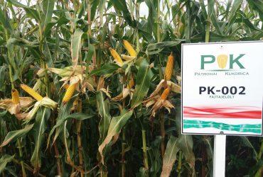 PK-002 Organikus Kukorica előrendelési AKCIÓ! – Rekordereknek! SZEMES/SILÓ HASZNOSÍTÁSRA