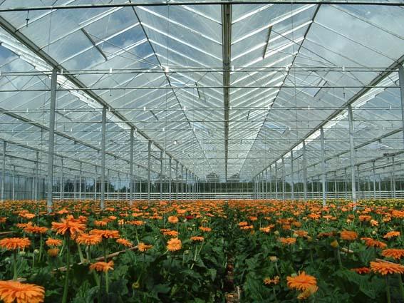 üvegházak fóliaházak